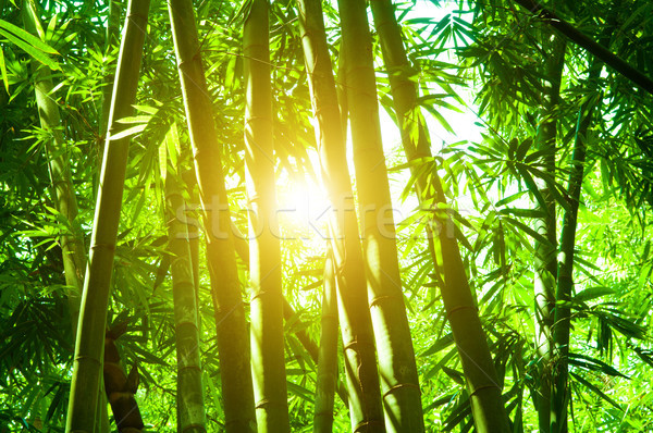 Photo stock: Bambou · forêt · soleil · flare · asian · paysage