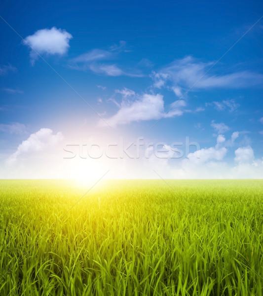 Green paddy fields landscape  Stock photo © szefei