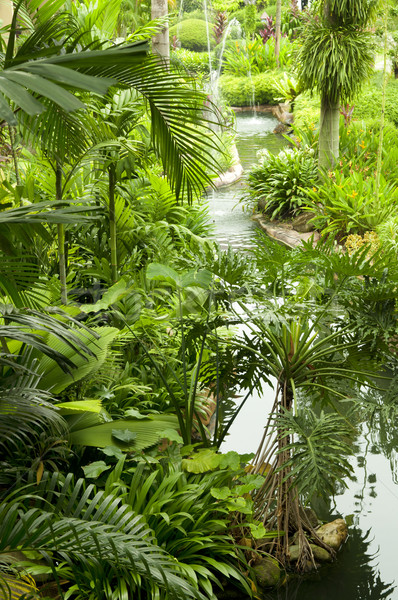 Tropicales jardín estanque plantas agua paisaje Foto stock © szefei