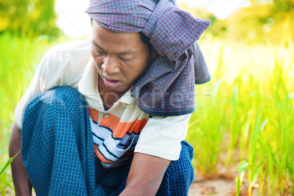 Myanmar male farmer Stock photo © szefei