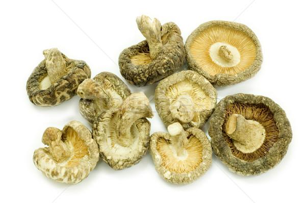 Shiitake mushroom Stock photo © szefei