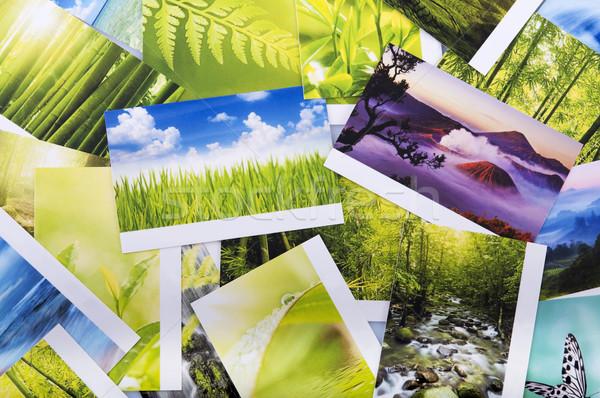 Stack of nature photo Stock photo © szefei
