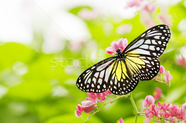 butterfly  Stock photo © szefei