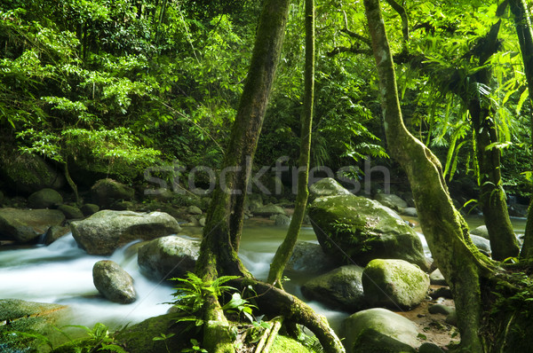 Green forest and stream Stock photo © szefei