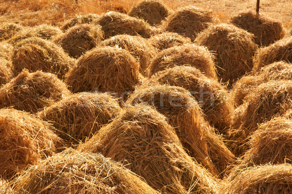 Hay stacks Stock photo © szefei