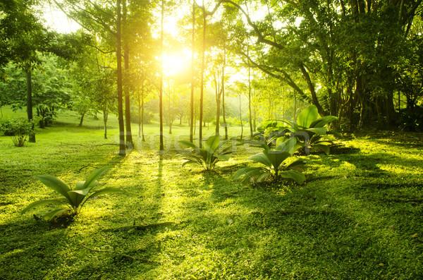Tropical green forest sunrise Stock photo © szefei