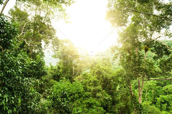 Naturalnych tropikalnych Rainforest światło słoneczne parku liści Zdjęcia stock © szefei