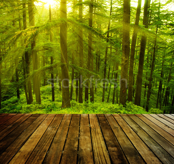 çam ağacı ahşap orman altın güneş ışığı Stok fotoğraf © szefei