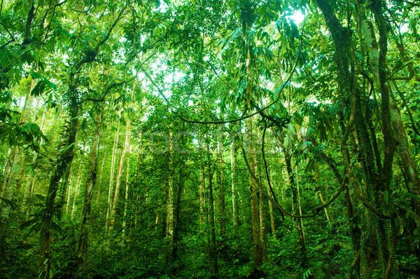 信じられない 熱帯 緑 森林 熱帯雨林 風景 ストックフォト © szefei