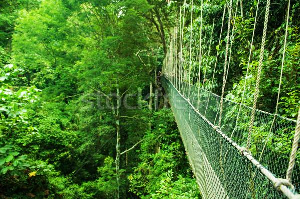 Canopy bridge Malaysia Stock photo © szefei