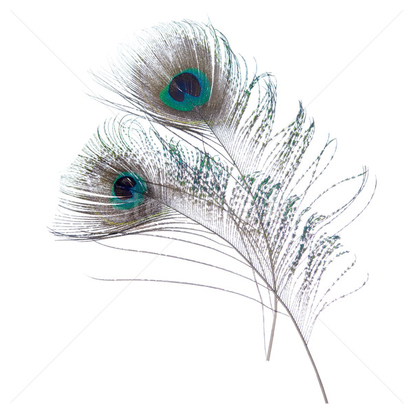 Close-up peacock feathers Stock photo © szefei