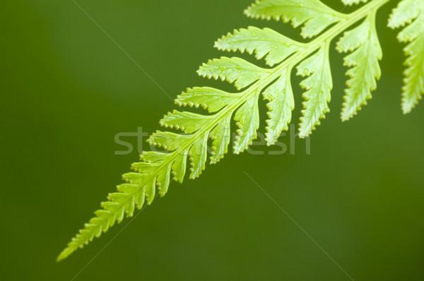 ストックフォト: 緑色の葉 · マクロ · 水滴 · 雨 · 森林 · 抽象的な