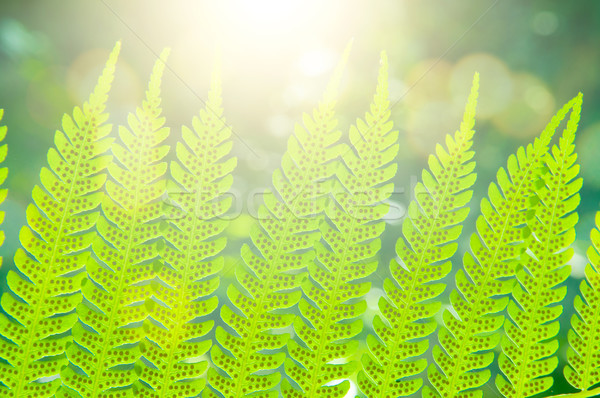 Close up fern leaf  Stock photo © szefei