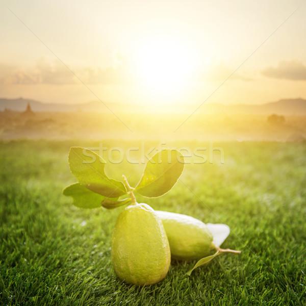 Chemical free organic grow lemon Stock photo © szefei