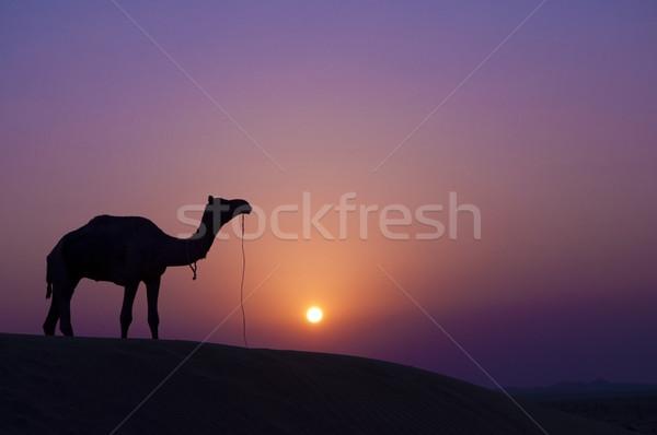 Teve naplemente sivatag tájkép nap természet Stock fotó © szefei