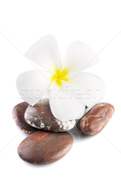 Frangipani on therapy stones Stock photo © szefei