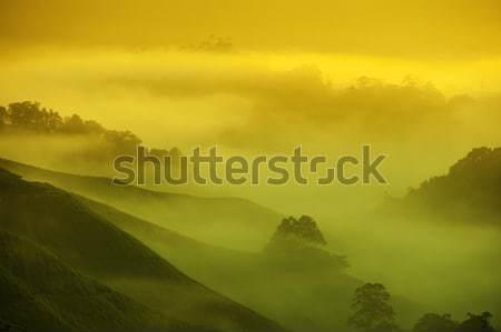 Chá Malásia nascer do sol de manhã cedo dente Foto stock © szefei