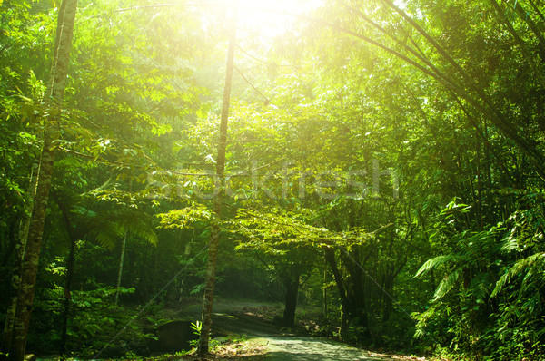 Tropical green park view Stock photo © szefei