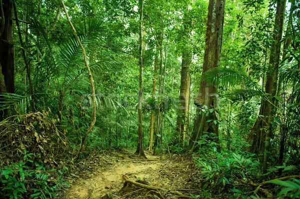 Trópusi esőerdő tájkép út zöld erdő Stock fotó © szefei