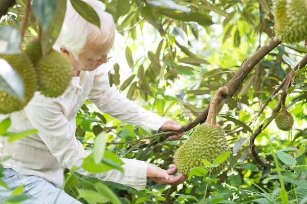 Boomgaard eigenaar boom asian landbouwer voedsel Stockfoto © szefei