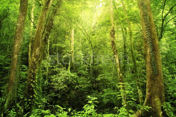 Selva tropical tropicales selva paisaje Malasia Asia Foto stock © szefei