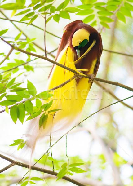 intim-rayskie-ptichki