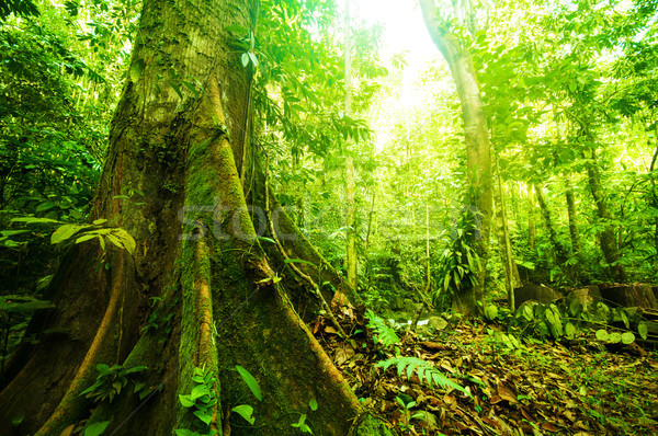 Fantastic tropical forest  Stock photo © szefei