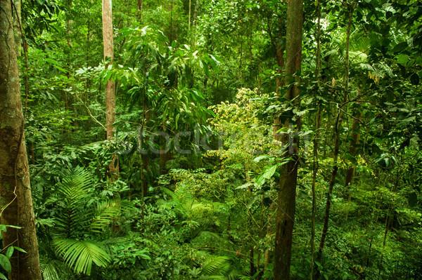 Tropicali foresta pluviale panorama foglia sfondo pioggia Foto d'archivio © szefei