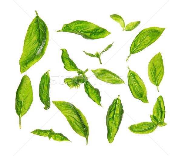 Scattered fresh sweet basil leaves Stock photo © szefei