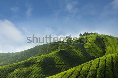 Thee hoogland Maleisië asia hemel boom Stockfoto © szefei