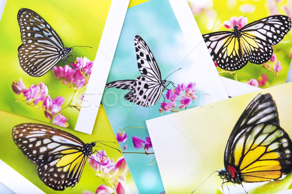 Papillon carte postale tous image papier Photo stock © szefei