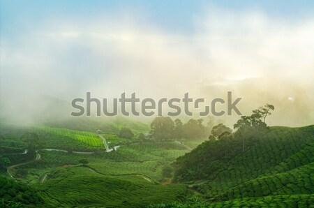 Thee hoogland Maleisië zonsopgang mist Stockfoto © szefei