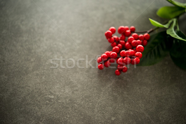Red flower dark background copy space. Stock photo © szefei