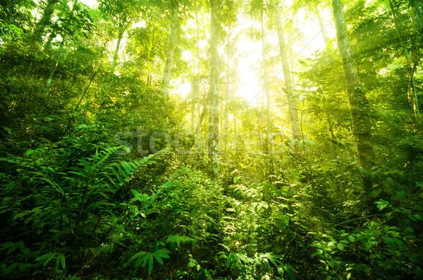 Fantastique tropicales jungle incroyable vue soleil Photo stock © szefei