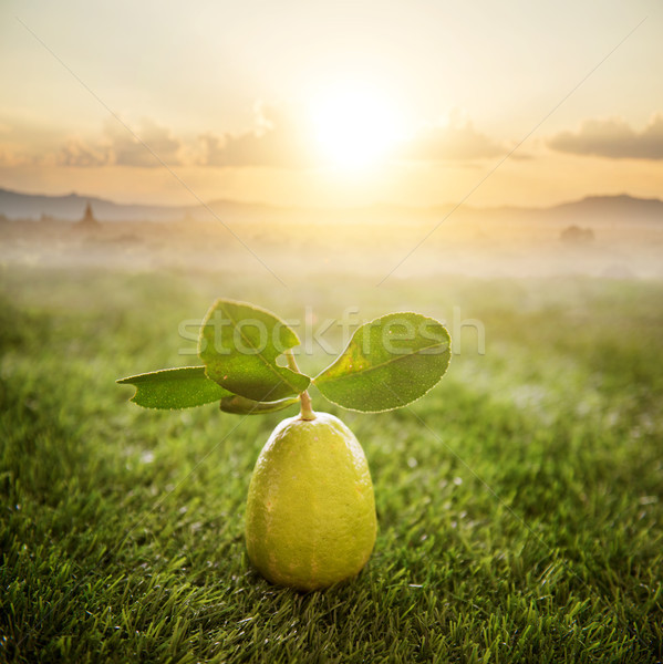 Chemical free fresh organic lemon Stock photo © szefei