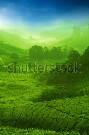 Thee plantage zonsopgang landschap natuur Stockfoto © szefei
