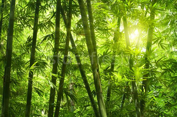 Bambu floresta asiático manhã luz solar textura Foto stock © szefei
