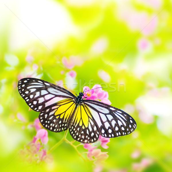 Mariposa flor amarillo vidrioso tigre Foto stock © szefei