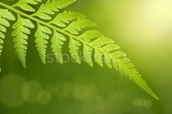 Foto d'archivio: Foglia · verde · pioggia · mattina · primavera · foresta