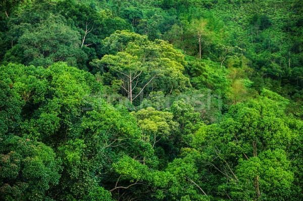 Trópusi zöld erdő kilátás tájkép levél Stock fotó © szefei