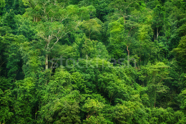 Tropicales selva vista paisaje hoja fondo Foto stock © szefei
