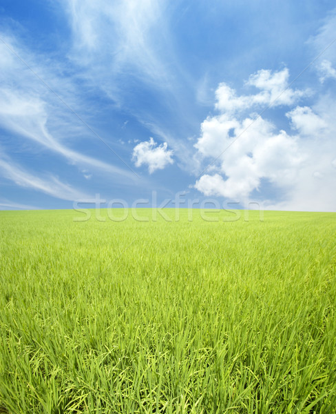 Stock photo: green field and sky