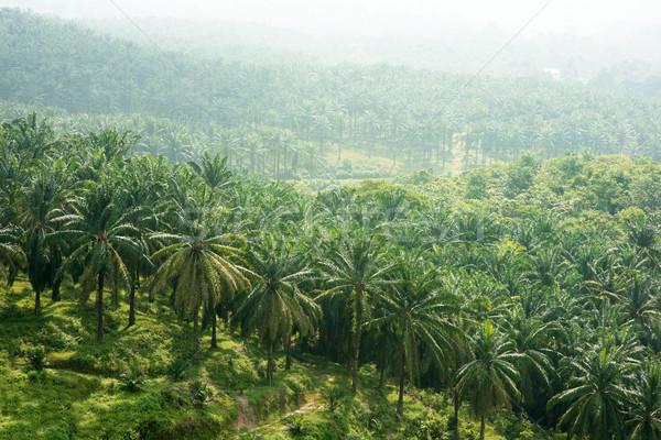 Palm oil estate Stock photo © szefei