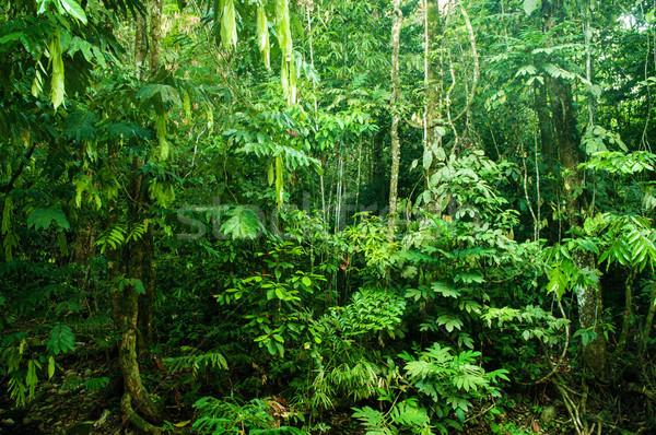 Hihetetlen trópusi sűrű erdő fantasztikus dzsungel Stock fotó © szefei