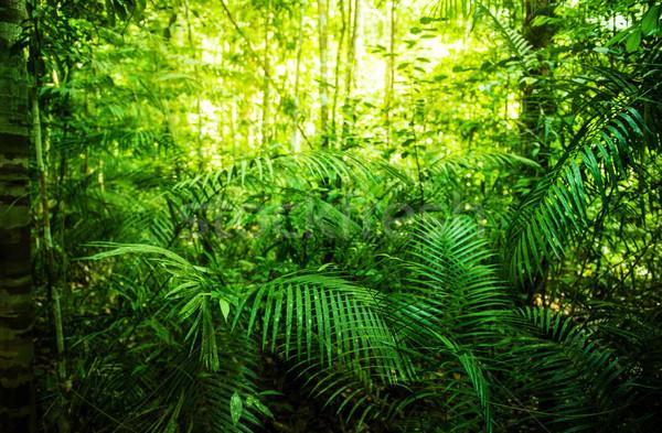 Tropical green forest  Stock photo © szefei