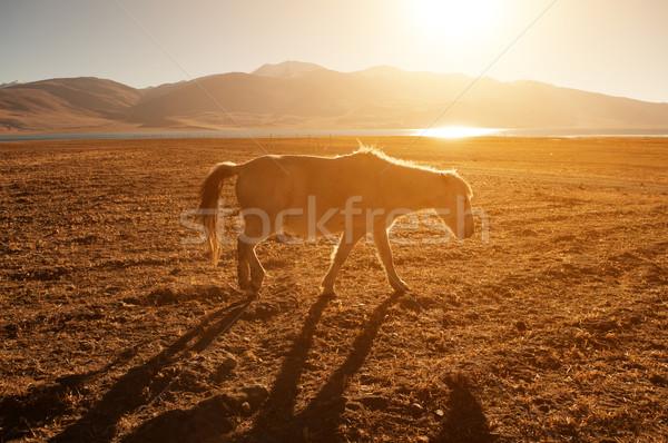 Horse in golden sunrise Stock photo © szefei