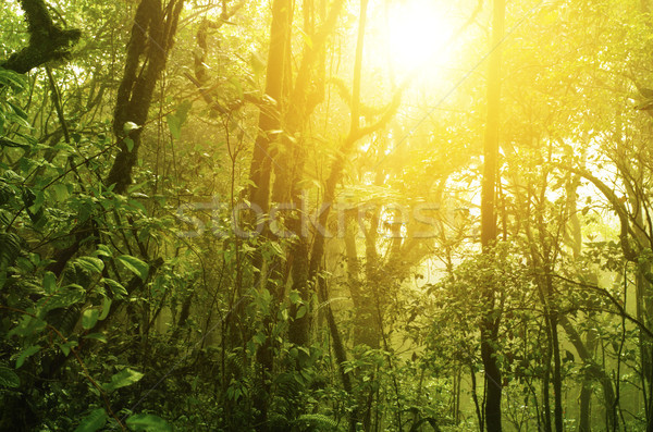 Tropical green forest Stock photo © szefei