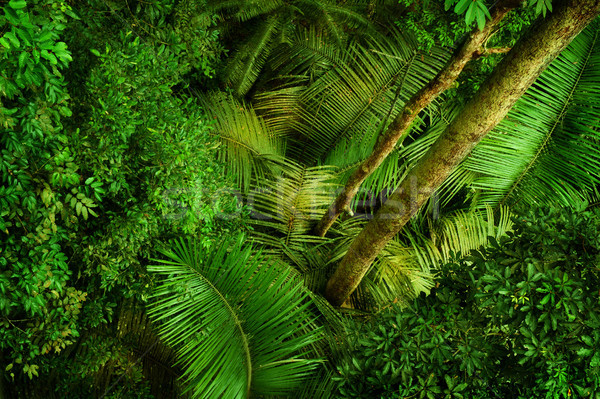 Tropical dense forest from top Stock photo © szefei