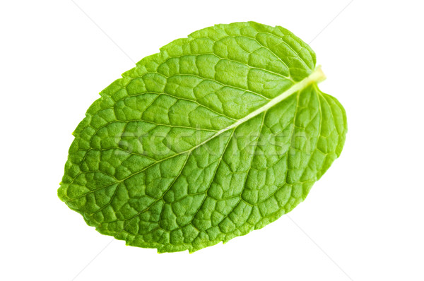 Mint leaf Stock photo © szefei