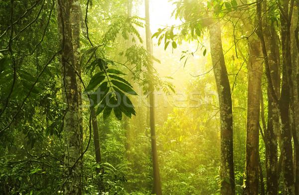 Trópusi zöld erdő napsugár esőerdő reggel Stock fotó © szefei